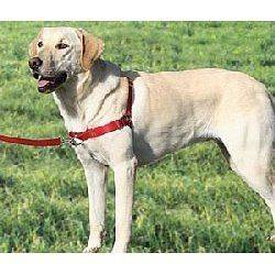 PREMIER Gentle Leader Easy Walk Dog Harnesses