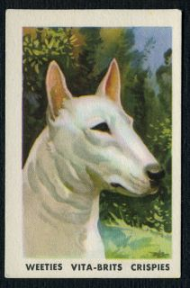 ENGLISH BULL TERRIER POPULAR PETS AUSTRALIAN DOG TRADE CARD FROM 1962