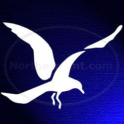 Seagull bird vinyl wall art car truck decal sticker 022