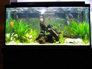 Gallon Planted Discus Aquarium w Fish Tank Stand and Supplies