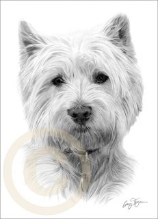 Dog West Highland White Terrier Le Art Pencil Drawing Print A4 Signed