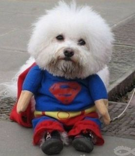 SUPERMAN DOG PARTY CLOTHES COSTUME SIZE IS EXTRA LARGE + BONUS MAGIC