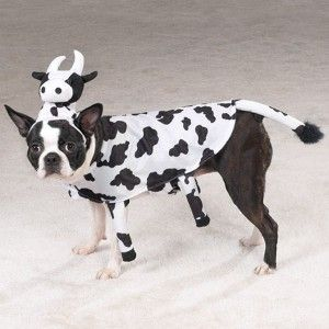 Halloween Dog Costume Clothes Udderly Adorable Cow XS