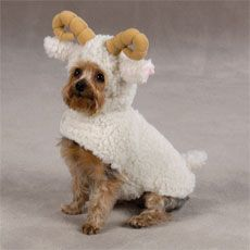 Halloween Pet Dog Cat Costume Berber Lil Sheep XSM 8 New