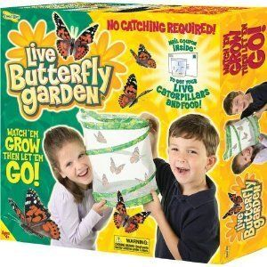 Insect Lore Butterfly Garden Live Educational Science Toy Kit FAST