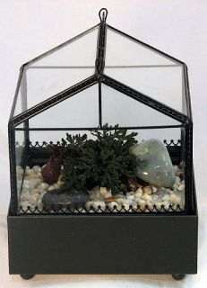 Gothic House Terrarium Wardian Case with Ruby Red Club Moss WAR147