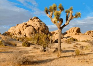 Joshua Tree 3D Lenticular Post Card